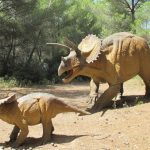 Musee des dinosaures - Triceratops