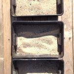 Fouille des dinosaures dans le sable