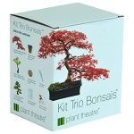 Kit-Trio-Bonsas-de-Plant-Theatre-3-bonsas-distinctifs--faire-pousser-Excellente-ide-de-cadeau-0