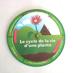 cycle de vie d'une plante
