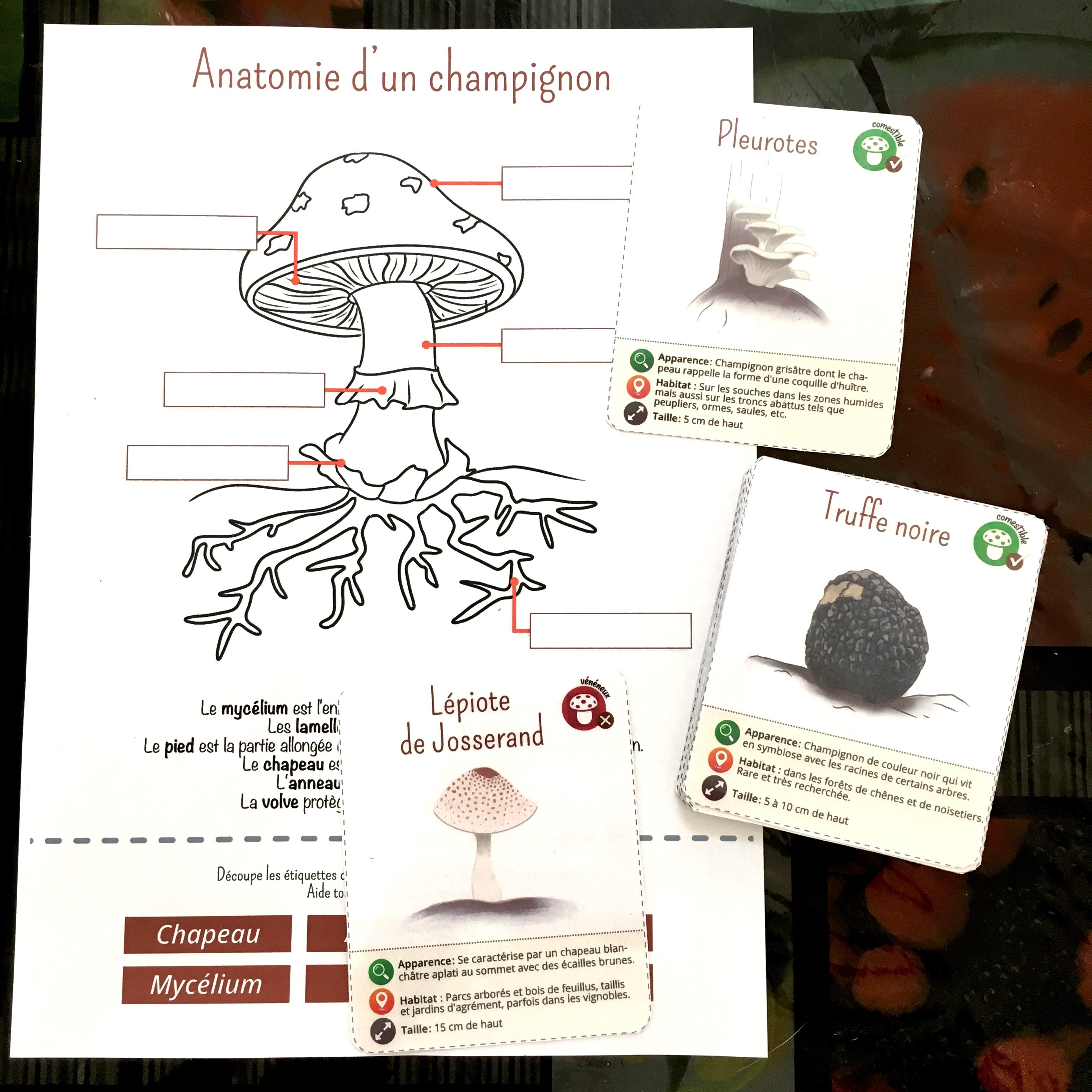 Cartes de nomenclature sur les champignons
