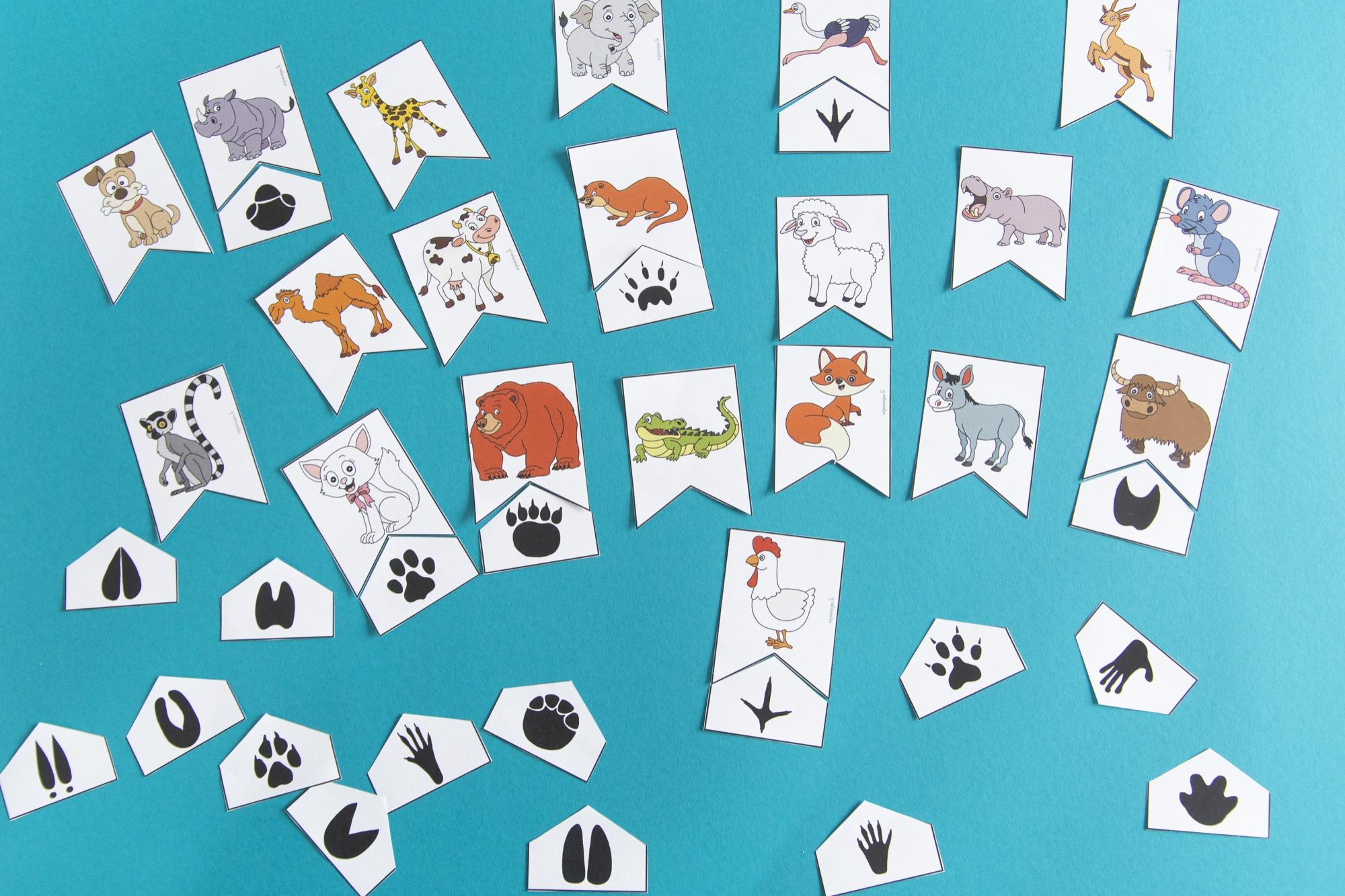 Empreintes animaux : étape 5